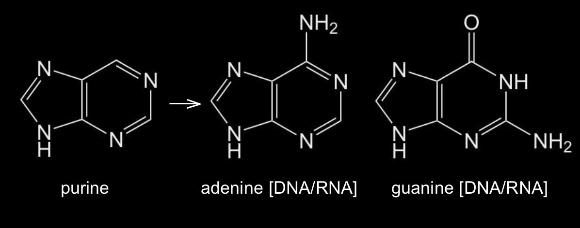 purine in lebensmittel